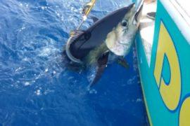 Dorado Sport Fishing