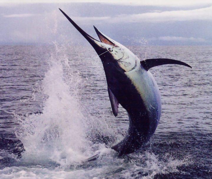 New Felusi Sport Fishing